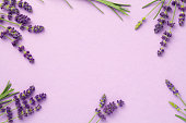 Lavender flowers on pink background. Copy space. Top view, flat lay