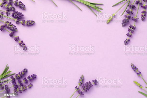 Lavender flowers on pink background picture id1163023801?b=1&k=6&m=1163023801&s=612x612&h=kxe4da0kzizam 2o9gwjnrtuwysgsxljumpzpjvxpvy=