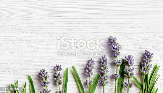Fresh Lavender flowers on white old wooden board, top view copy space