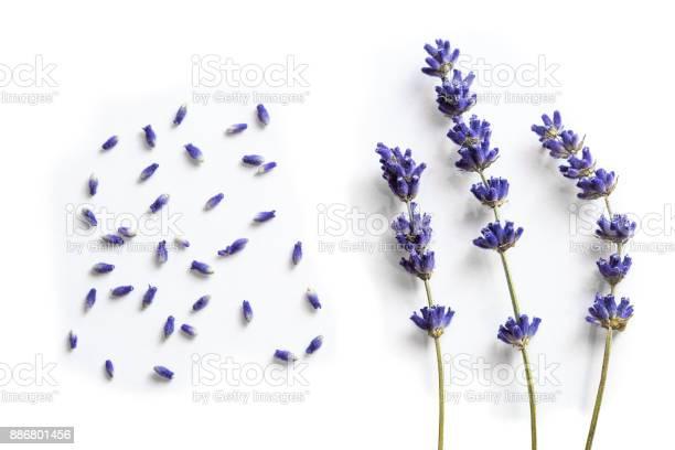 Lavender flowers picture id886801456?b=1&k=6&m=886801456&s=612x612&h=xxjvuidhiwyihdv56c3hkgt6dkja8neikyehdi5n6lo=