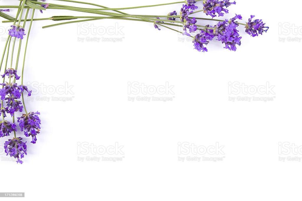 lavender frame royalty-free stock photo
