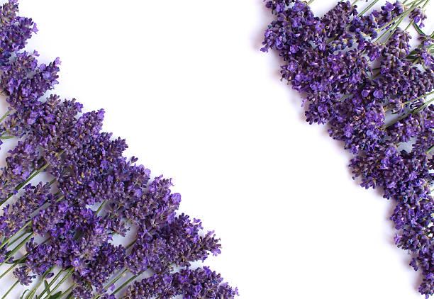 Lavendel-frame – Foto