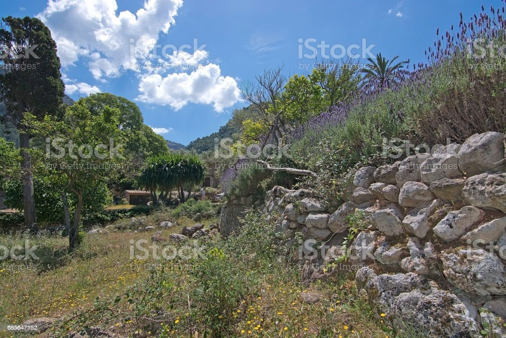 Lavender garden view Mallorca royalty-free 스톡 사진