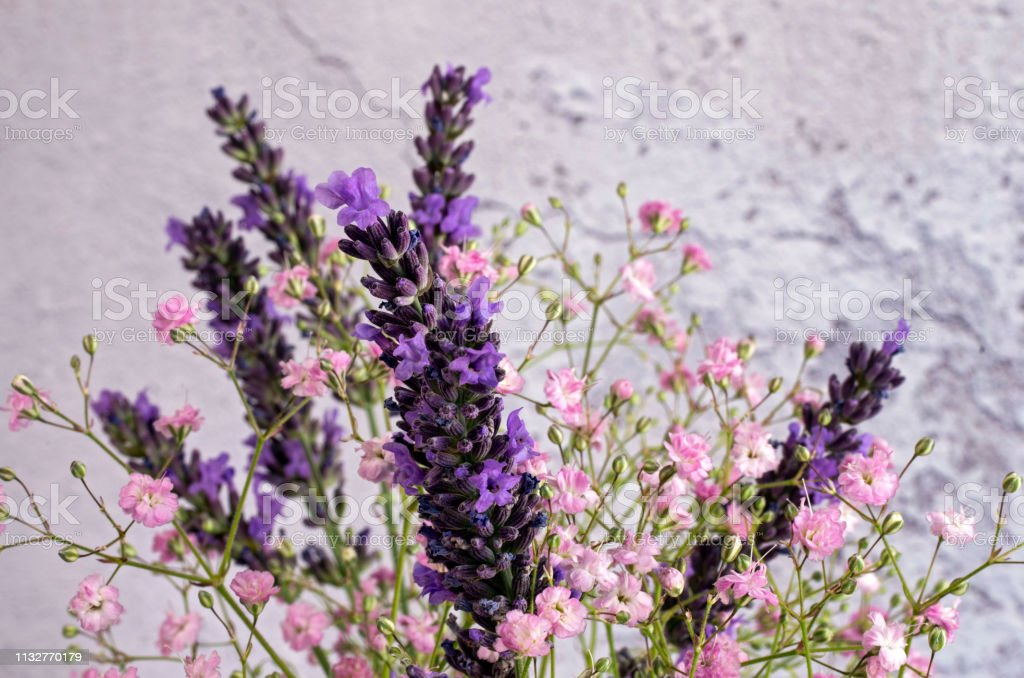 Lavender & Gypsophila stock photo
