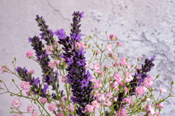 Lavender & Gypsophila stock photo