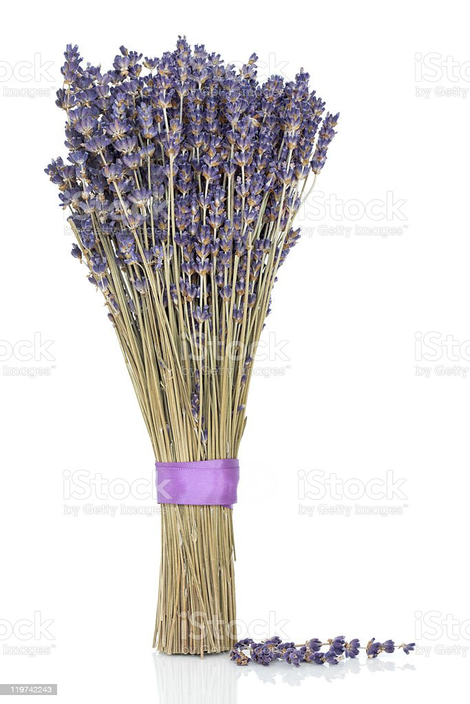 Lavender Herb Flowers royalty-free stock photo