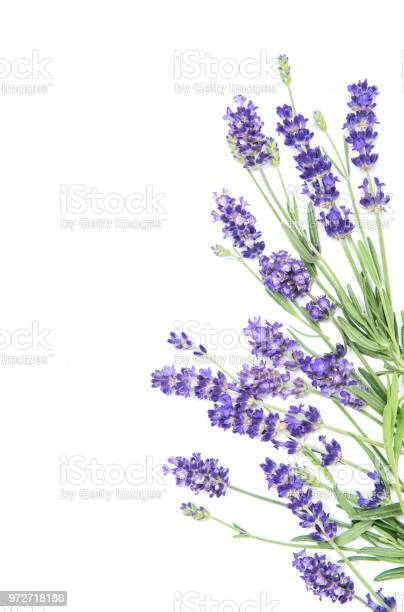 Lavender herb flowers white background picture id972718186?b=1&k=6&m=972718186&s=612x612&h=f61l u1eb0l6c1g1auvzodxb lmrbcrwgnxb5zr6tqw=