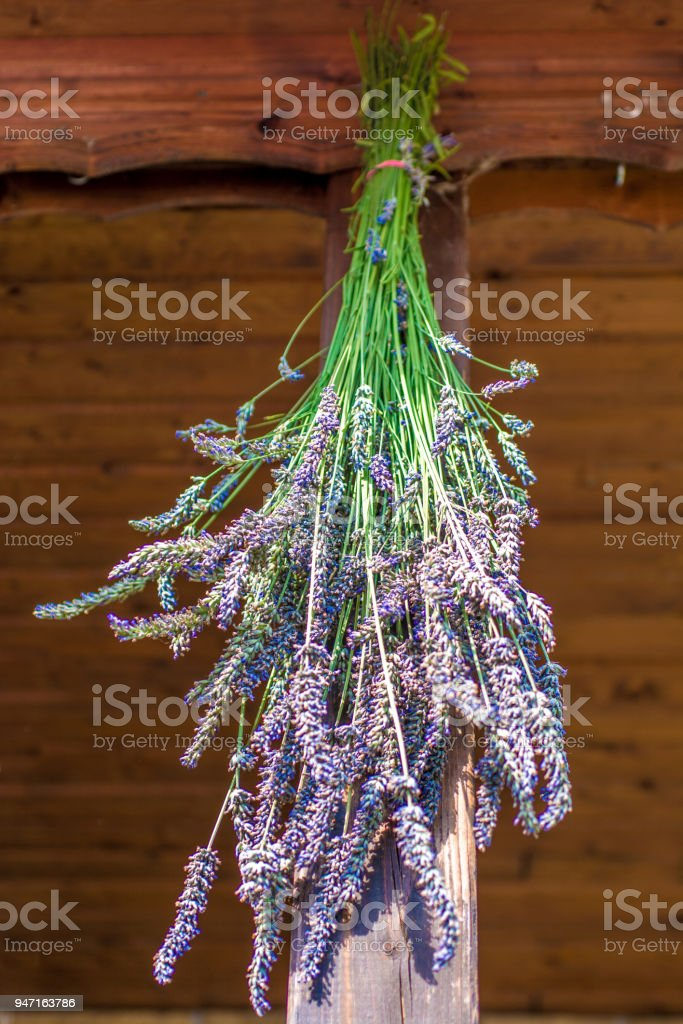 Lavender hung to dry stock photo