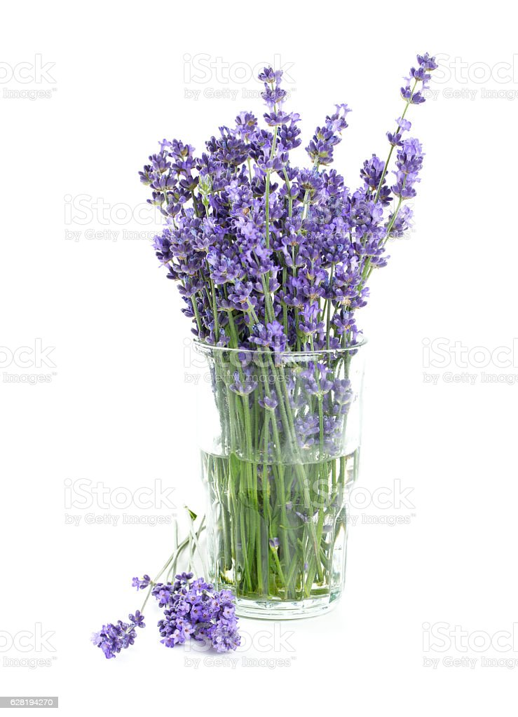 lavender in a glass isolated on white stock photo