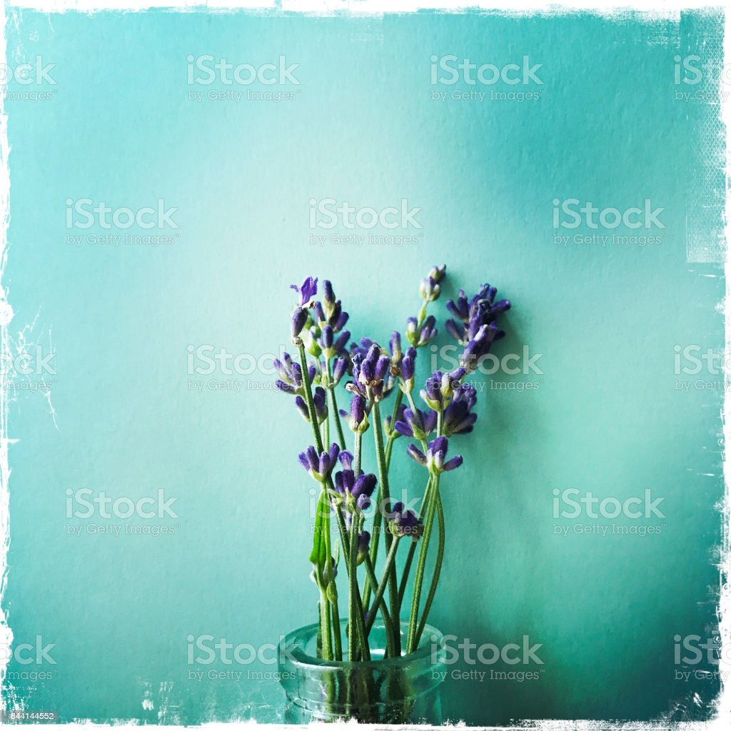 Lavender in Vase on Blue Background stock photo