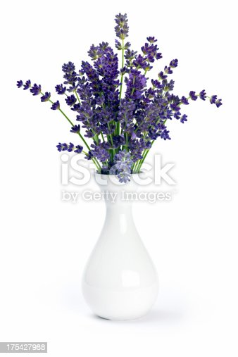 Lavender flowers in a white vase on white background.