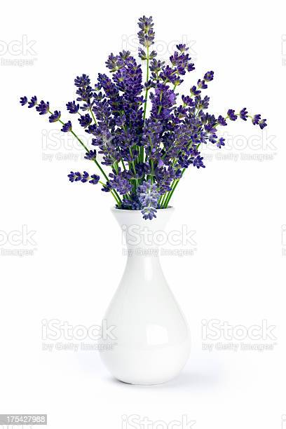 Lavender in vase picture id175427988?b=1&k=6&m=175427988&s=612x612&h=cj3 4ctupitysrzm1otbhjbmtz76 cxgtkbioggcvfc=