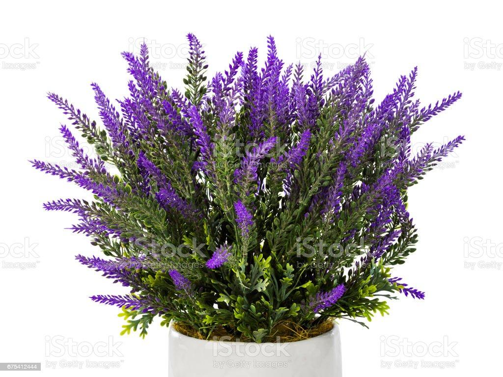 Lavender in vase photo libre de droits