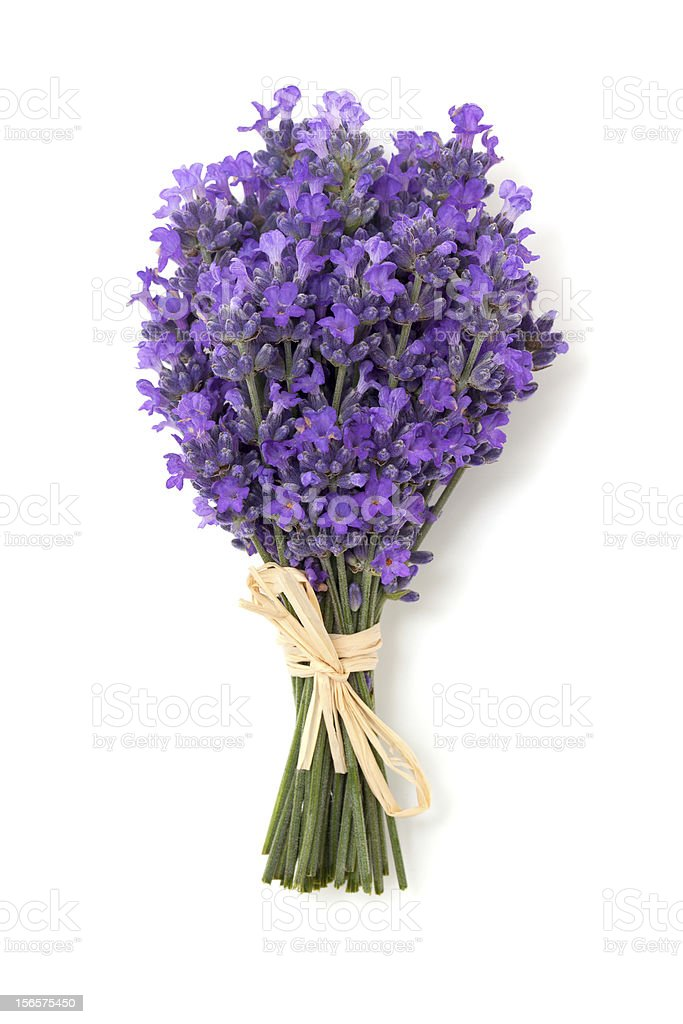lavender isolated on white background royalty-free stock photo