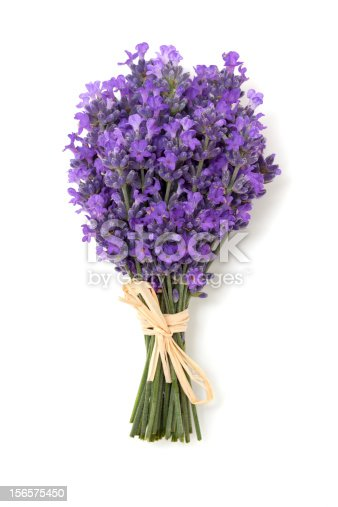 tied up lavender isolated on white background