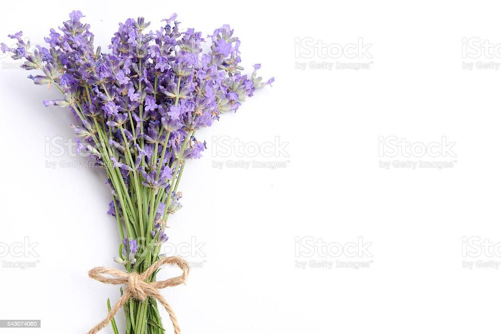 lavender on white background stock photo
