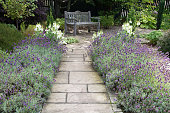 A stone path, flanked on both sides with flowering lavender, leading to a garden bench.