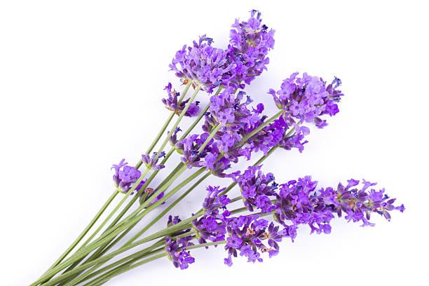 Lavender picture id162680699?b=1&k=6&m=162680699&s=612x612&w=0&h=ddpbtzunxb iw0mwfjxza1dmdzsndmi8fgpaagtwfkq=