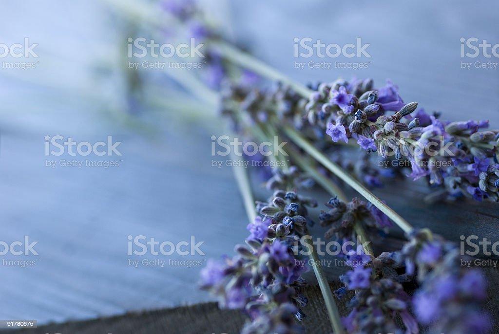 Lavender - Royalty-free Blue Stock Photo