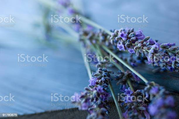 Lavender Stock Photo - Download Image Now