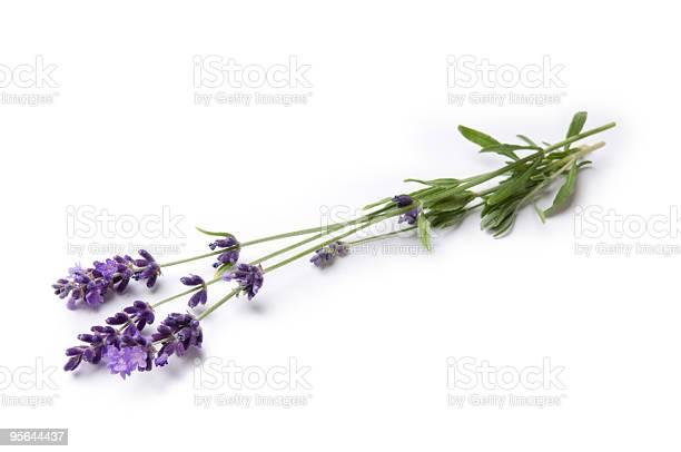 Lavender picture id95644437?b=1&k=6&m=95644437&s=612x612&h=obak0fw kyae0wginr1cau2mc9bf tph5tdlpfivooe=