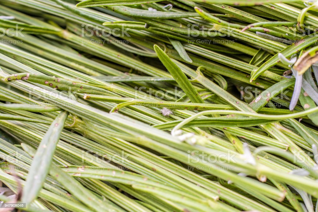 Lavender stalks in close-up stock photo