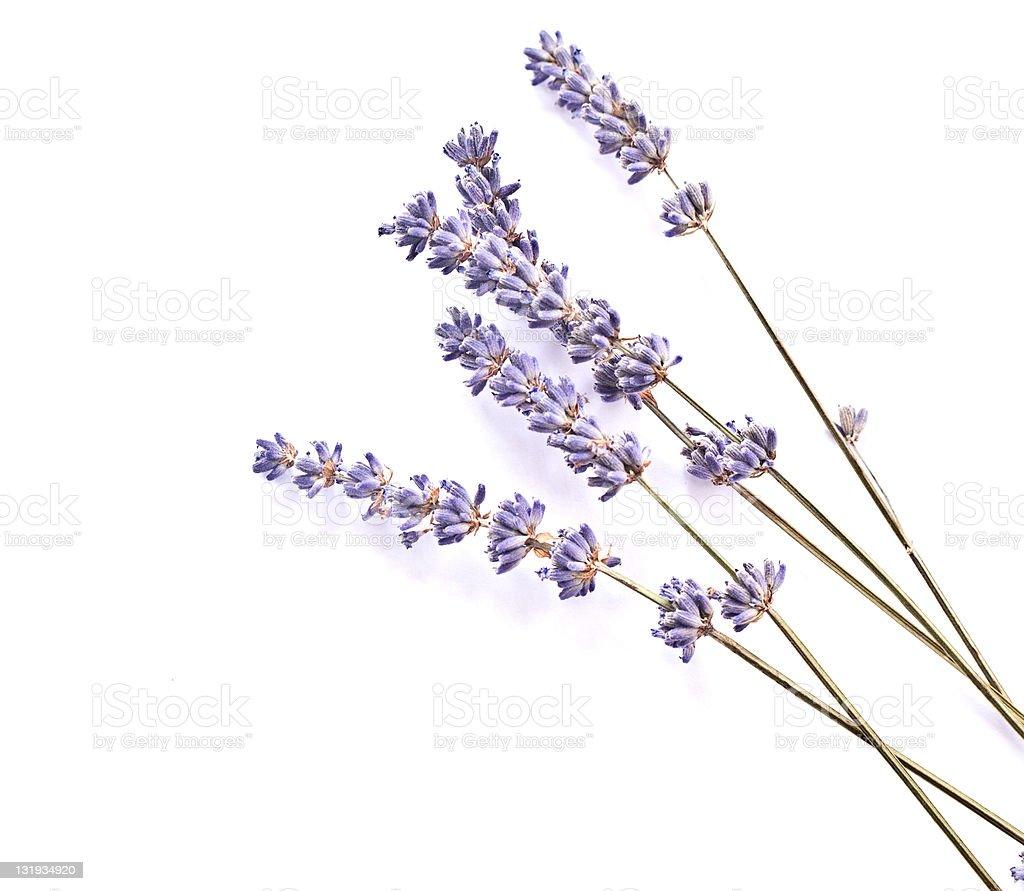 lavender stems background stock photo