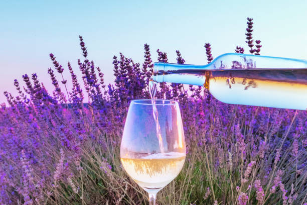 Lavender wine. White wine poured into a glass against a lavender field background stock photo