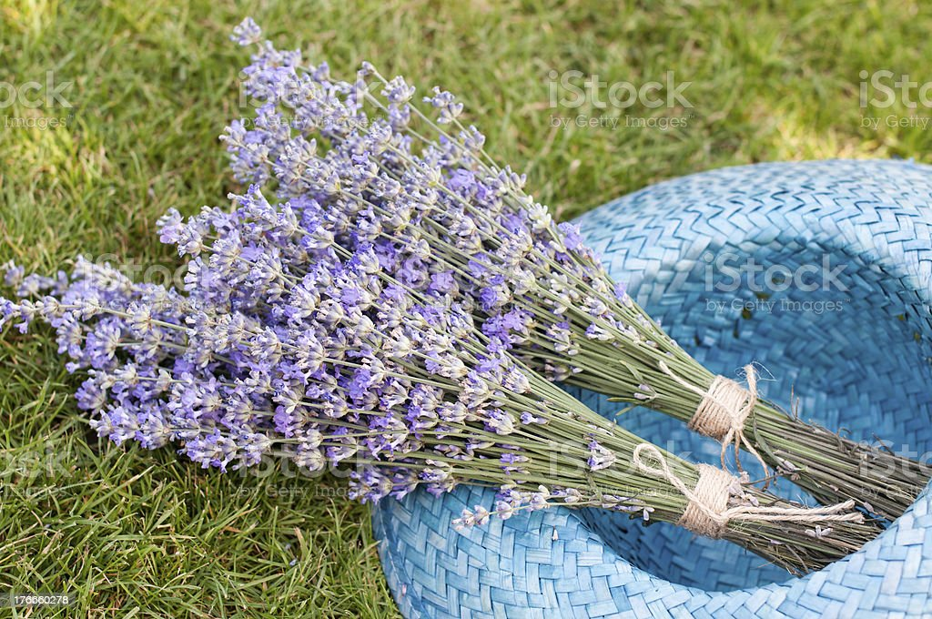 Laventer in hat royalty-free stock photo