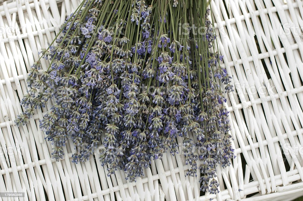 Laventer royalty-free stock photo