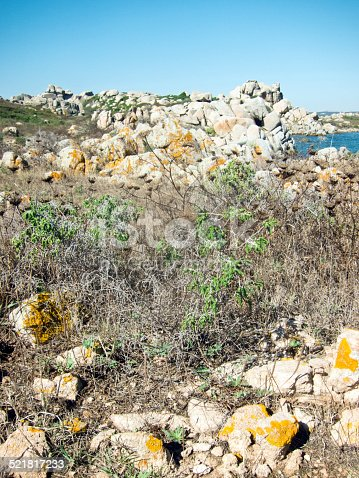 Rock formations and vegetation on the Lavezzi Island in Corsica