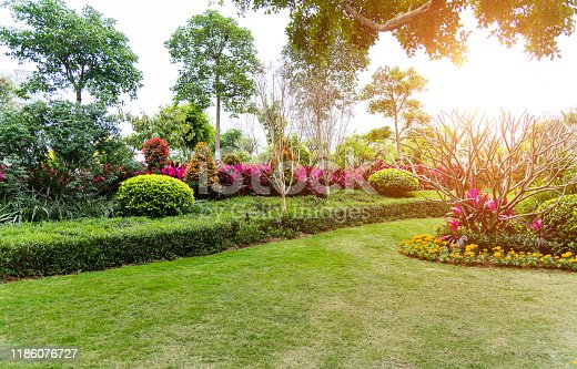 601026242 istock photo Lawn and bush in the garden 1186076727