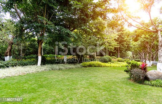 601026242 istock photo Lawn and bush in the garden 1186077437