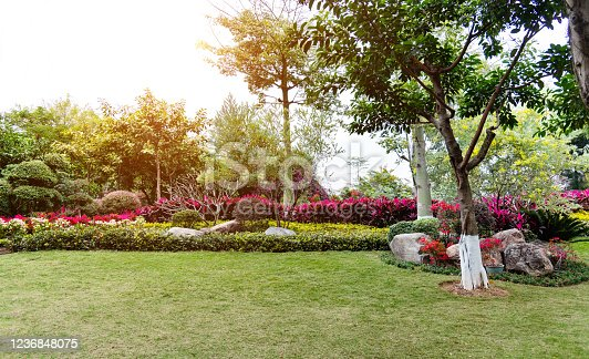 601026242 istock photo Lawn and bush in the garden 1236848075