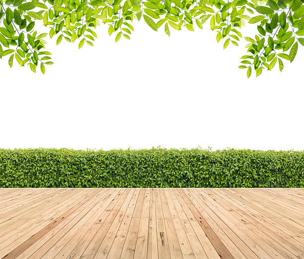 Lawn and wooden floor with hedge stock photo