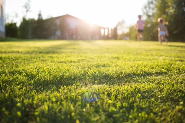 gramado em casa. crianças em funcionamento em borrão. em um dia de verão ensolarado. - gramado terra cultivada - fotografias e filmes do acervo