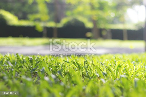 601026242istockphoto lawn at morning at park 964116170