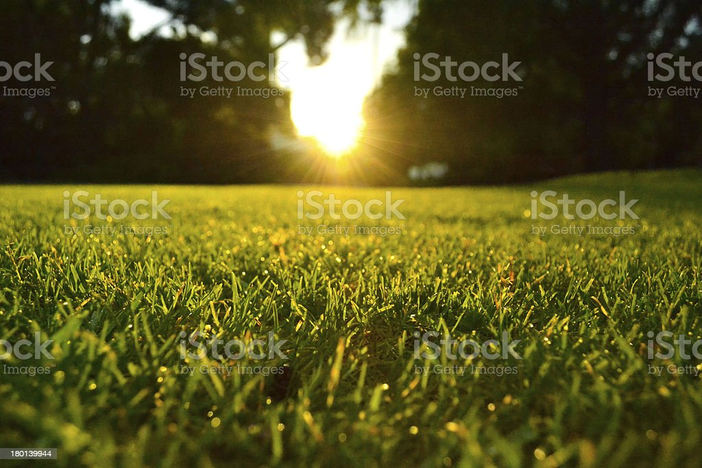 Lawn at sunset stock photo