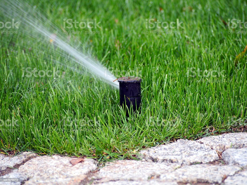 Lawn automatic irrigation system, working sprinkler. stock photo