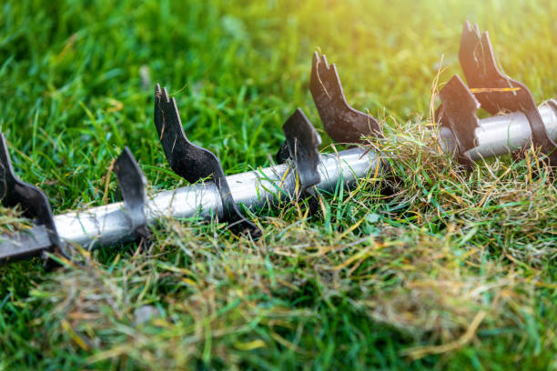 lawn care - old grass removal and soil aeration with scarifier stock photo