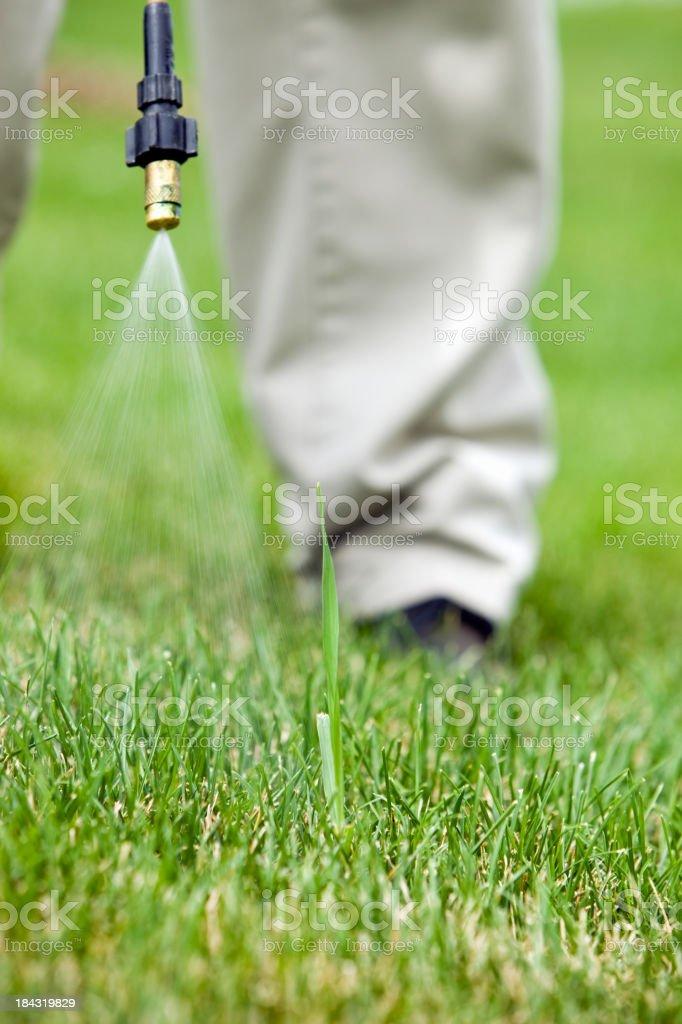 Lawn Care Worker Sprays Crabgrass stock photo