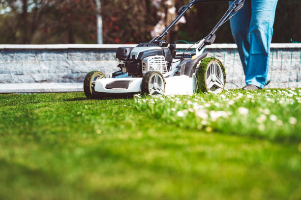 Lawn mower mowing green grass Lawn, Gardening, Lawn Mower, Front or Back Yard, Mowing mowing stock pictures, royalty-free photos & images