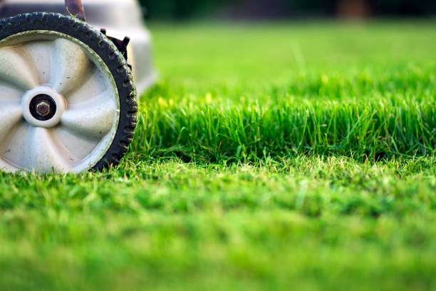 23 015 Lawn Care Stock Photos Pictures Royalty Free Images Istock