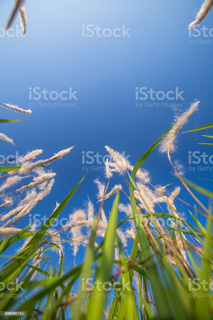 lawn outside in spring under blue sky royalty-free stock photo