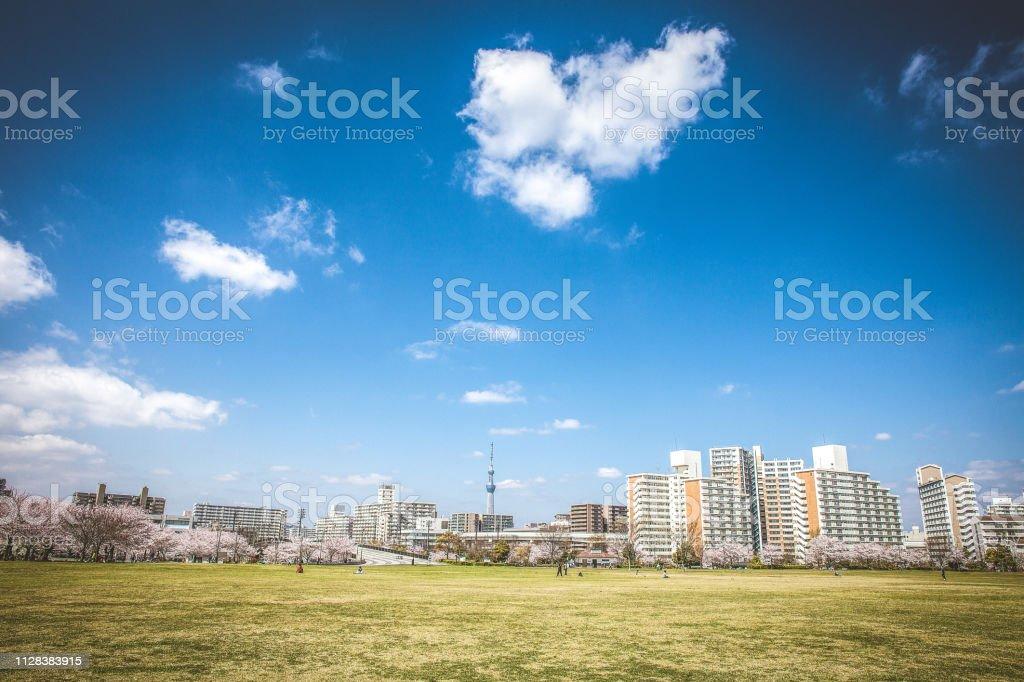 芝生公園 ストックフォト