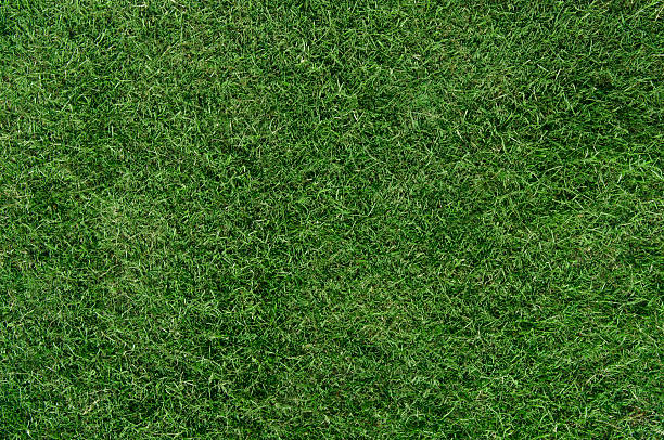 Lawn Lawn,Grass baseball diamond stock pictures, royalty-free photos & images