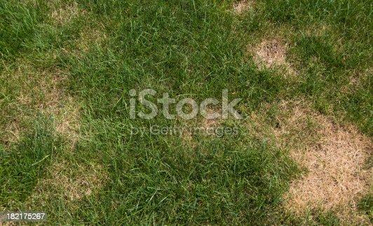 istock Lawn problems 182175267