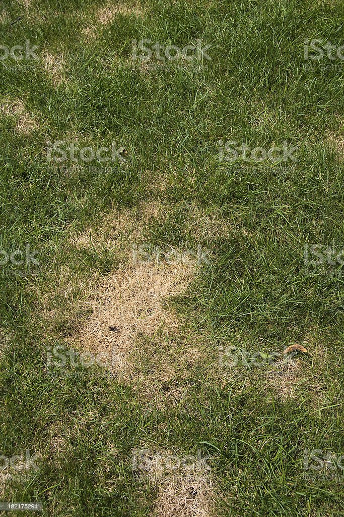 Lawn problems stock photo