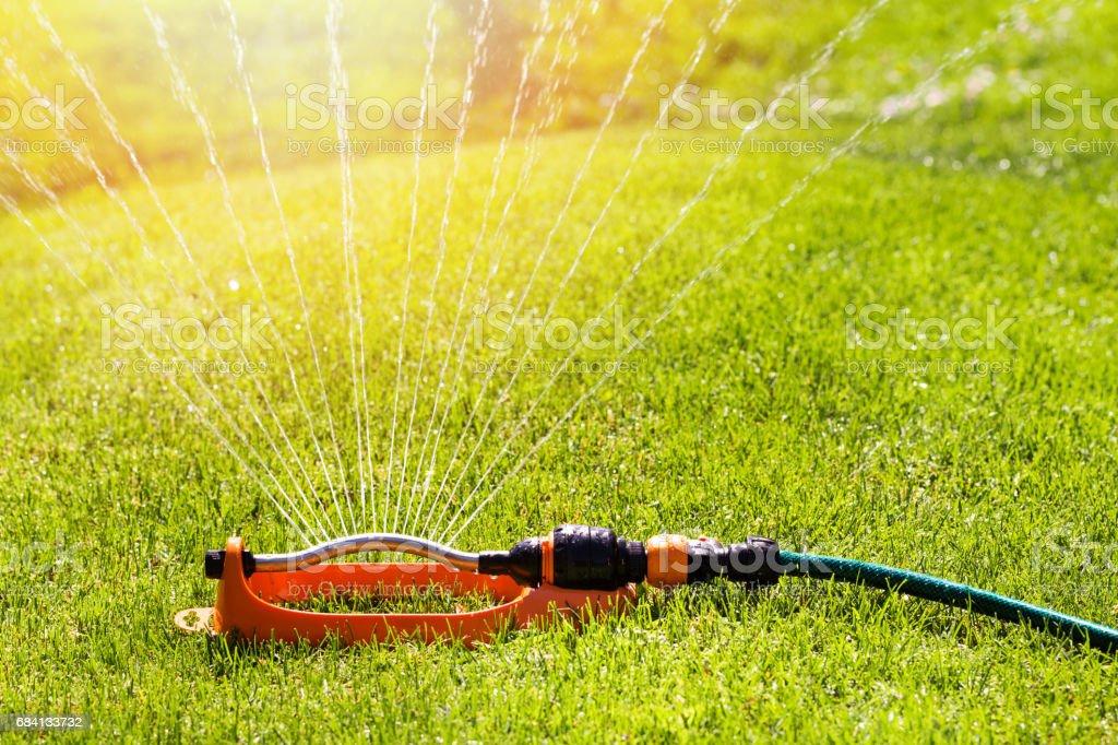 arrosage de pelouse la stérilisation de l'eau sur le système d'irrigation de l'herbe verte - Photo