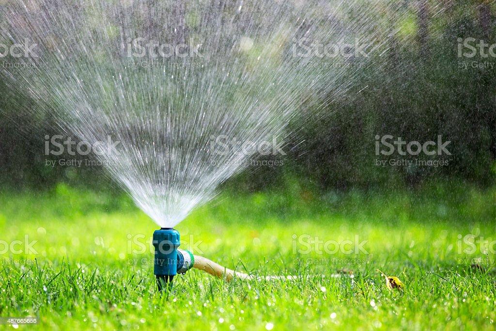 Lawn sprinkler spraying water over grass stock photo